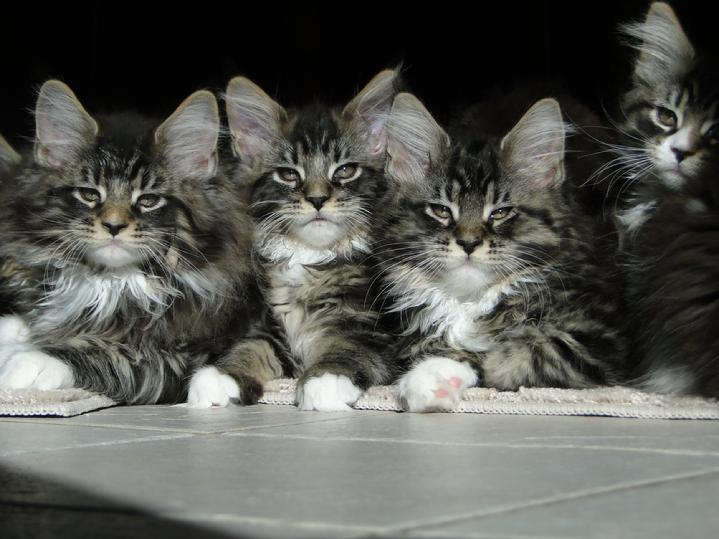 what type of cat is grumpy cat